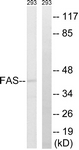 B0927-1 - CD95 / FAS