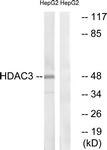 B0939-1 - HDAC3