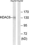 B0941-1 - HDAC6