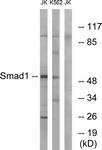 B0994-1 - SMAD1