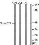 B1001-1 - SMAD3