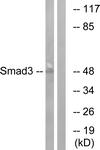 B1004-1 - SMAD3