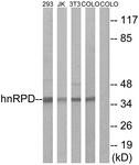 B1043-1 - hnRNP-D0 / HNRNPD