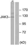 B1080-1 - Tyrosine-protein kinase JAK3