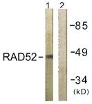 B1119-1 - RAD52