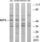 B1164-1 - ZC3HC1