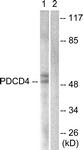 B1175-1 - PDCD4