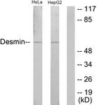 B1196-1 - Desmin