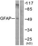 B1205-1 - GFAP