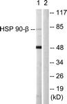 B1210-1 - HSP90AB1 / HSP90 beta