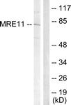 B1217-1 - MRE11