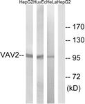 B1241-1 - VAV2