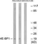 B7002-1 - EIF4EBP1 / 4E-BP1