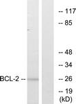 B7026-1 - Bcl-2