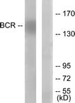 B7028-1 - BCR