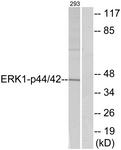 B7073-1 - MAPK3 / ERK1