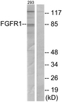B7084-1 - FGFR1