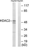 B7099-1 - HDAC2