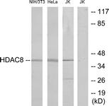 B7102-1 - HDAC8