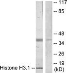 B7107-1 - Histone H3.1