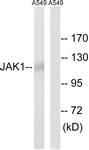 B7125-1 - Tyrosine-protein kinase JAK1