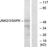 B7129-1 - MAPK8 / JNK1