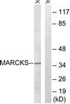 B7142-1 - MARCKS