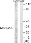 B7143-1 - MARCKS
