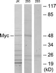 B7157-1 - c-Myc