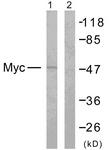B7158-1 - c-Myc