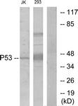 B7185-1 - TP53 / p53