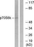 B7188-1 - RPS6KB1 / STK14A