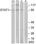 B7221-1 - STAT1