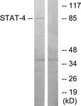 B7225-1 - STAT4