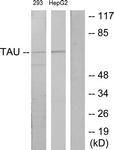 B7244-1 - MAPT / TAU
