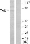 B7245-1 - MAPT / TAU