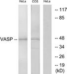 B7250-1 - VASP