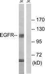 B8026-1 - EGFR / ERBB1