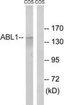 B8074-1 - ABL1
