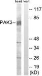 B8163-1 - PAK3