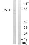 B8178-1 - RAF1
