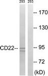 B8230-1 - CD22