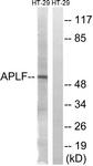 B8291-1 - APLF