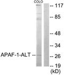 C0128-1 - APAF1