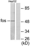 C0149-1 - c-fos