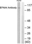 C0181-1 - Ephrin-A4