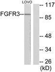 C0192-1 - CD333 / FGFR3