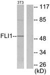 C0196-1 - FLI1