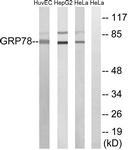 C0217-1 - HSPA5 / GRP78