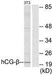 C0220-1 - Chorionic Gonadotropin (hCG)